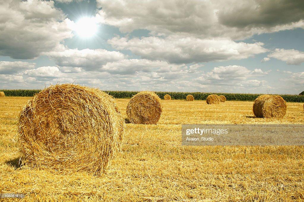 Straw rolls : Stock Photo