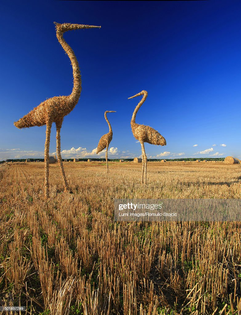 Straw Stork on Field, Baranja, Croatia : Stock Photo