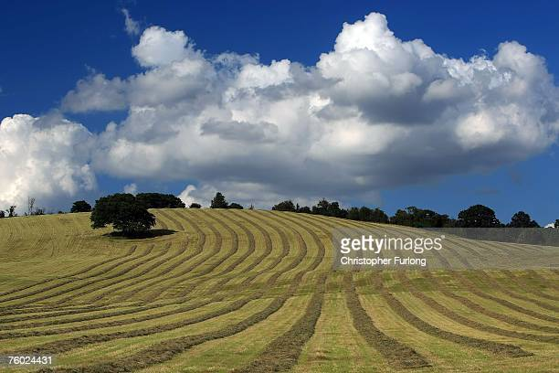 Straw waits to be harvested in a field in the Herefordshire countryside on August 8 2007 in Hereford England In a tense week the British farming...