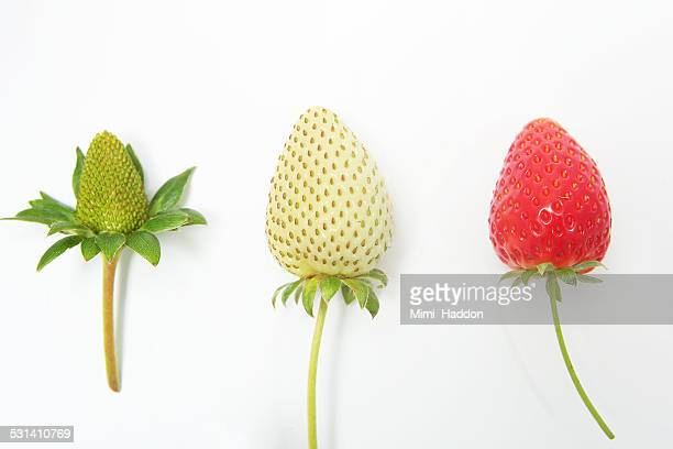 Strawberries Growth Phases