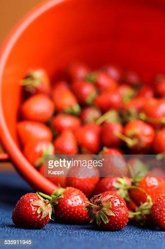 Fresas : Foto de stock