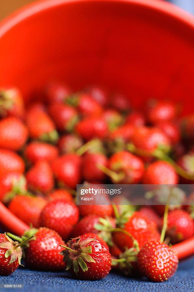Strawberries : Stock Photo