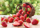 fresh strawberries fallen out of a wooden basket outdoors