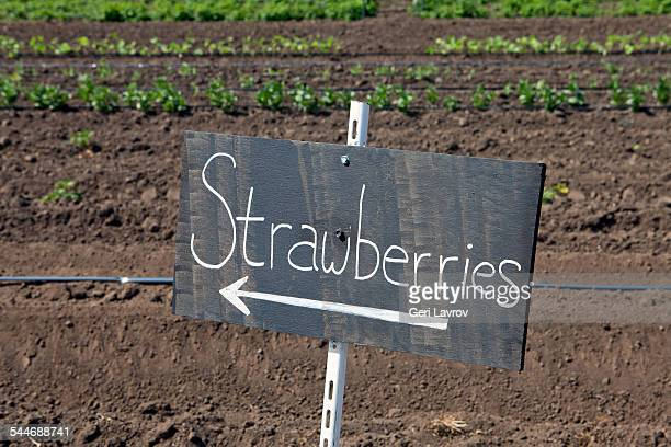 Strawberries sign in a field