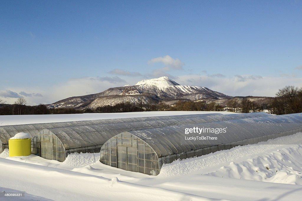 Strawberry Farm in Winter Hokkaido Japan : Stock Photo