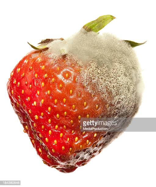 Strawberry Gray Mold disease