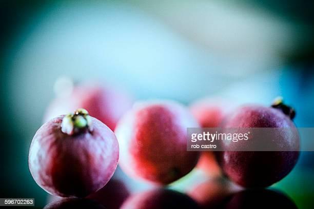 Strawberry guavas