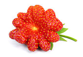 Ripe strawberry of irregular shape in the form of a flower, isolated on a white background.