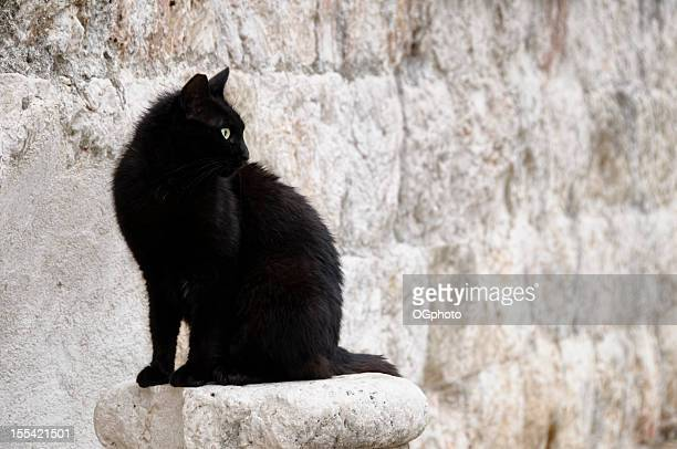 Stray black cat against a stone wall