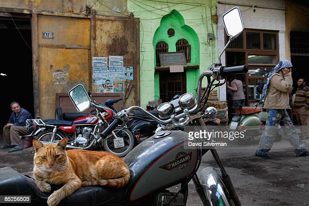 A stray cat finds a place to relax on the seat of a motorbike on one of the narrow streets of the medieval town founded as alQahira in 969 AD as the...