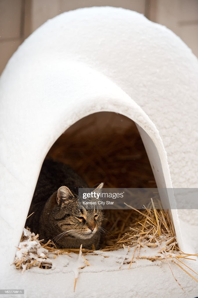 A stray cat found shelter inside a hay-filled pet igloo in the Valentine neighborhood in Kansas City, Missouri, during heavy snowfall that blanketed the metro area, Thursday, February 21, 2013.