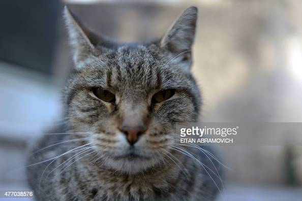 A stray cat is pictured at La Recoleta cemetery in Buenos Aires Argentina on June 13 2015 AFP PHOTO/EITAN ABRAMOVICH