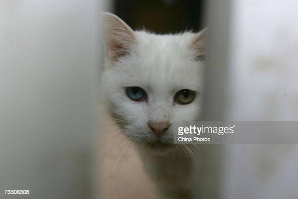 A stray cat looks out of a slot at a little animal protection base on February 12 2007 in Beijing China Beijing Little Animal Protection Association...