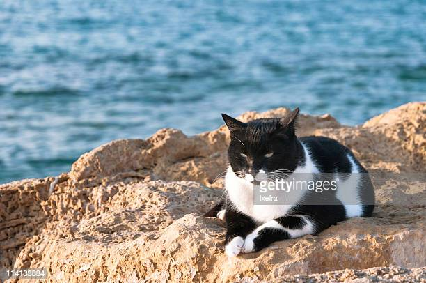 Stray cat on the beach.