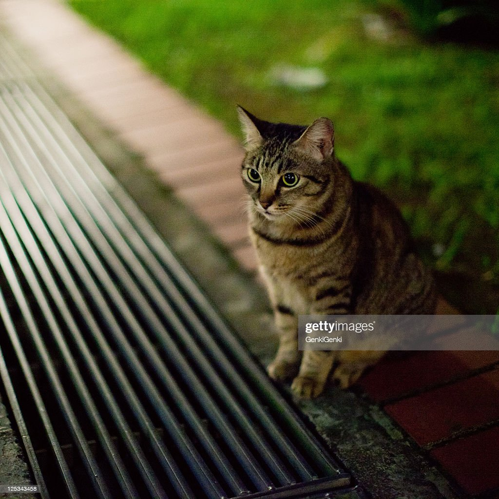 Stray cat : Stock Photo