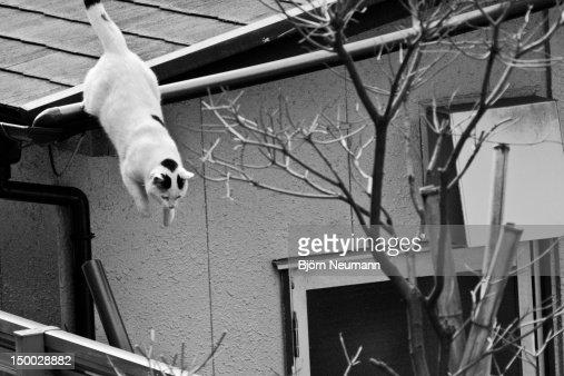 Stray cat : Stock Photo