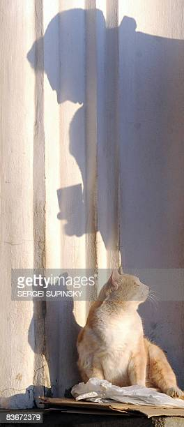 A stray cat rubs itself against a wall as an elderly woman begs outside a church in the center of Kiev on November 11 2008 The global economic crisis...