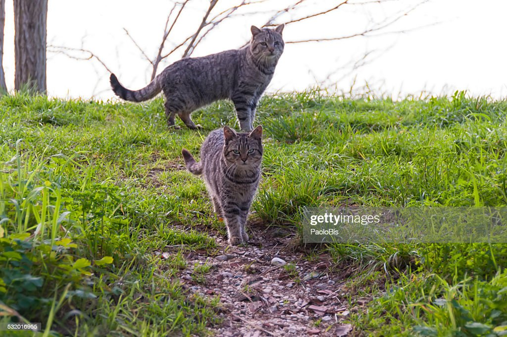 Stray cats in the Venetian countryside