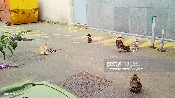 Stray Cats On Street Against Wall