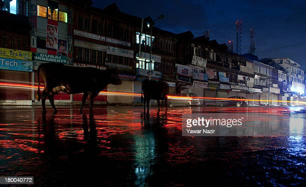 Stray cows stand in a waterlogged street after a hail storm September 08 2013 in Srinagar the summer capital of Indian administered Kashmir India...