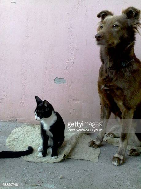 Stray Dog And Cats Sitting Against Pink Wall