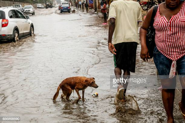 A stray dog emerges from a pool of water in Luanda on March 23 2017 as floods in Angola have killed at least eleven people and left thousands...