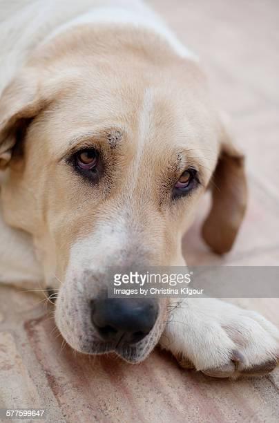 Stray dog in Portugal