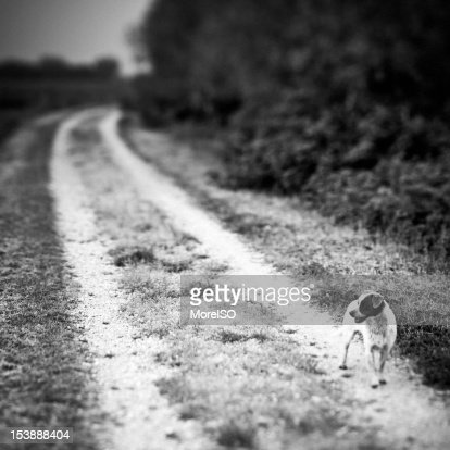 Stray Dog in the Countryside Black and White : Stock Photo