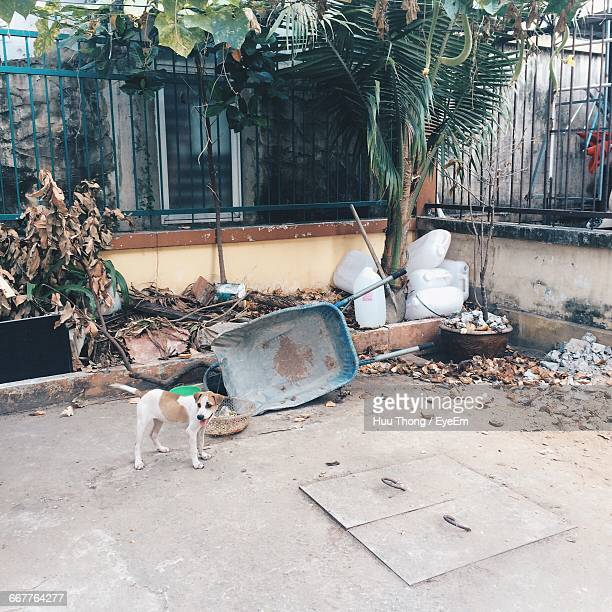 Stray Dog On Footpath By Building