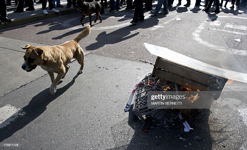 A stray dog plays around during a demonstration against the government of Chilean President Sebastian Pinera in Santiago on July 11, 2013 in Santiago. Since the beginning of the massive marchs of students protesting against the education system in 2011, scores of stray dogs happily participate in all the clashes with riot police, playing under the jets of the water cannons and accompanying the students whilst they are chased by police. In Santiago there are about 500,000 stray dogs, according to municipal authorities.