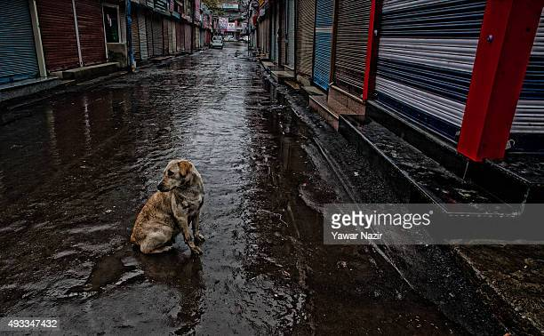 A stray dog sits in the middle of a road next to the shuttered shops in the deserted city center during a strike against the killing of a Truck...