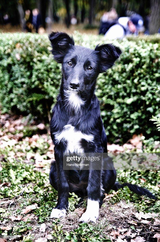 A stray dog sits on autumn foliage. : Stock Photo