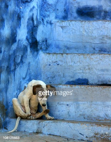 Stray dog sitting on blue stairs,Jodhpur,Rajasthan,India