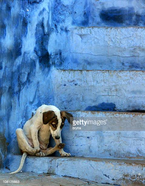 Stray dog sitting on blue stairs,Jodhpur,Rajasthan,India