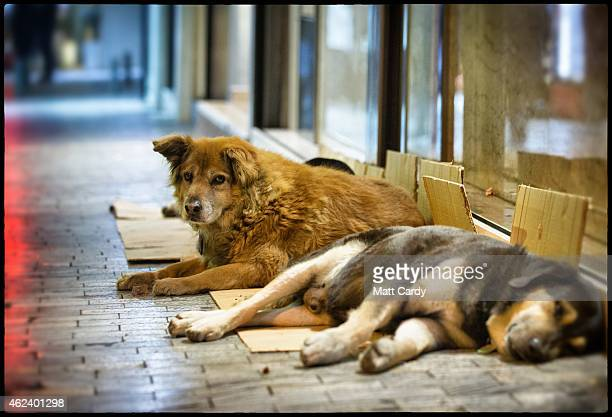 A stray dog sleeps in front of a branch of McDonald's in the centre of Athens on January 21 2015 in Athens Greece Stray dogs are a common sight in...