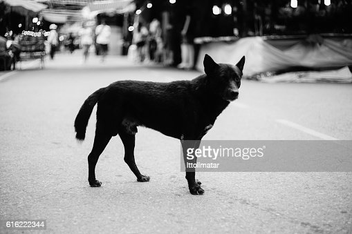 stray dog standing alone on a street,selective focus : Stock-Foto