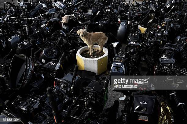 TOPSHOT A stray dog stands among outboard motors that were used by refugees and migrants to reach the Greek northern island of Lesbos in Mytilene on...