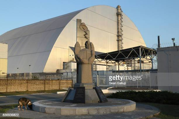 A stray dog stands at a monument outside the new giant enclosure that covers devastated reactor number four at the CHORNOBYL nuclear power plant on...
