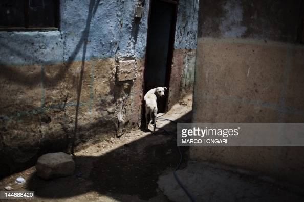 A stray dog wanders in an alley of the 'City of the Dead' neighborhood in Cairo on May 20 2012 AFP PHOTO/MARCO LONGARI