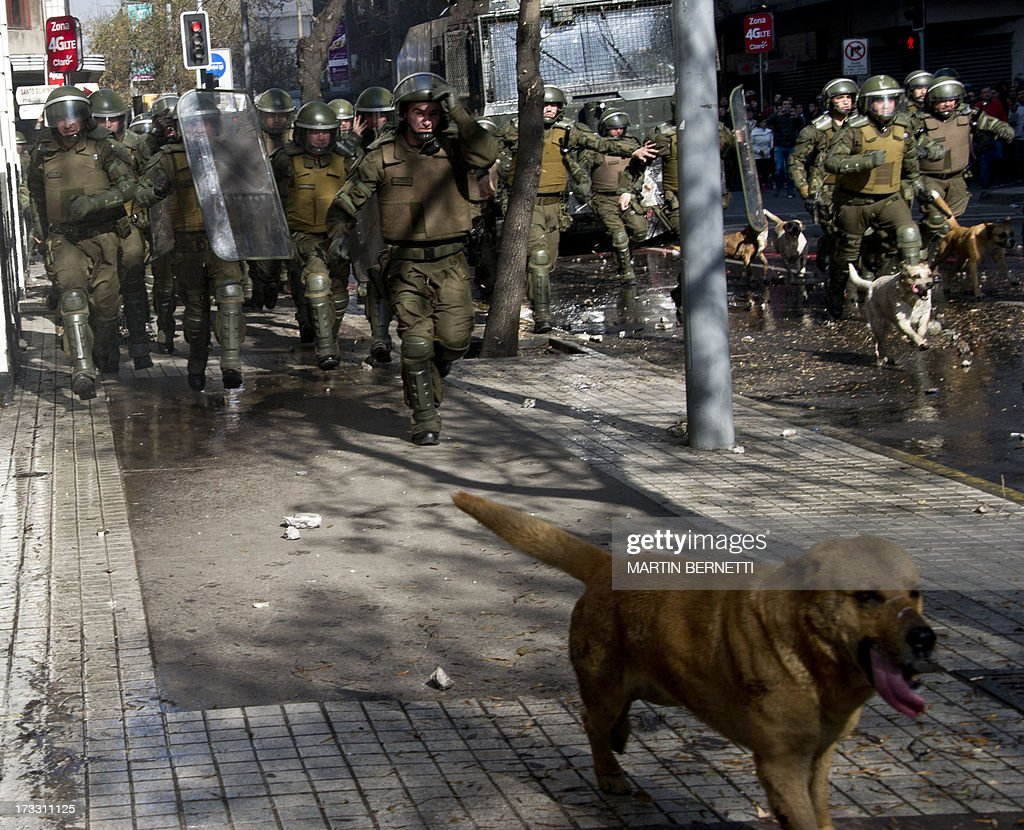 Stray dogs accompany a charge of riot police during a demonstration against the government of Chilean President Sebastian Pinera in Santiago on July 11, 2013 in Santiago. Since the beginning of the massive marchs of students protesting against the education system in 2011, scores of stray dogs happily participate in all the clashes with riot police, playing under the jets of the water cannons and accompanying the students whilst they are chased by police. In Santiago there are about 500,000 stray dogs, according to municipal authorities.
