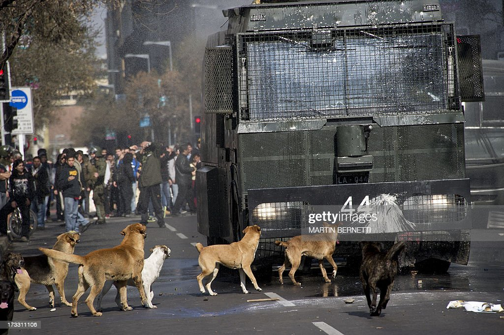 Stray dogs bark at a riot police water cannon during a demonstration against the government of Chilean President Sebastian Pinera in Santiago on July 11, 2013 in Santiago. Since the beginning of the massive marchs of students protesting against the education system in 2011, scores of stray dogs happily participate in all the clashes with riot police, playing under the jets of the water cannons and accompanying the students whilst they are chased by police. In Santiago there are about 500,000 stray dogs, according to municipal authorities. AFP PHOTO MARTIN BERNETTI