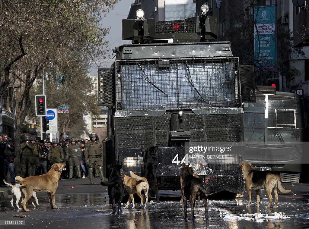 Stray dogs bark at a riot police water cannon during a demonstration against the government of Chilean President Sebastian Pinera in Santiago on July 11, 2013 in Santiago. Since the beginning of the massive marchs of students protesting against the education system in 2011, scores of stray dogs happily participate in all the clashes with riot police, playing under the jets of the water cannons and accompanying the students whilst they are chased by police. In Santiago there are about 500,000 stray dogs, according to municipal authorities.
