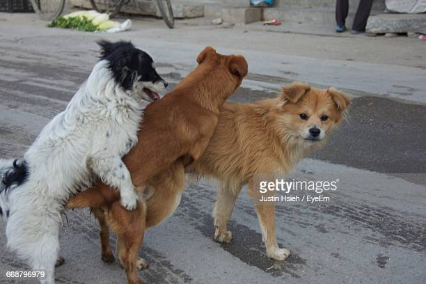 Stray Dogs Mating Videos To Watch