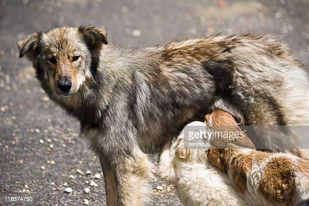 Cani di dispersione