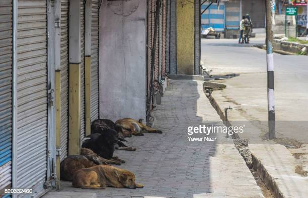 Stray dogs rest in front the shuttered shops in the old city during curfew on July 21 2017 in Srinagar the summer capital of Indianadministered...