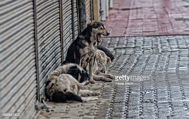 Stray dogs rest next to the shuttered shops in the deserted city center during a strike against the killing of a Truck conductor by Hindu mob on...
