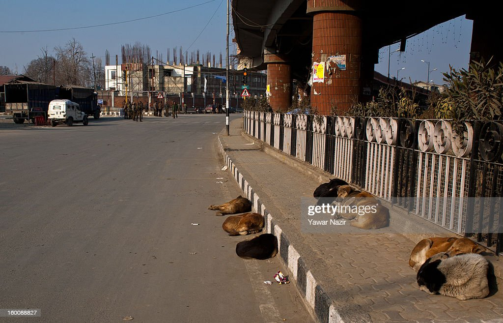 Stray dogs rest on a road side in main city during a strike on India's Republic Day celebrations on January 26, 2013 in Srinagar, the summer capital of Indian Administered Kashmir. All businesses, schools and shops were closed and traffic remained off the roads following a strike call given by Kashmiri separatist leaders against India's Republic Day celebrations in Kashmir. Meanwhile India deployed large numbers of Indian police and paramilitary forces to prevent any incidents during the official celebrations.