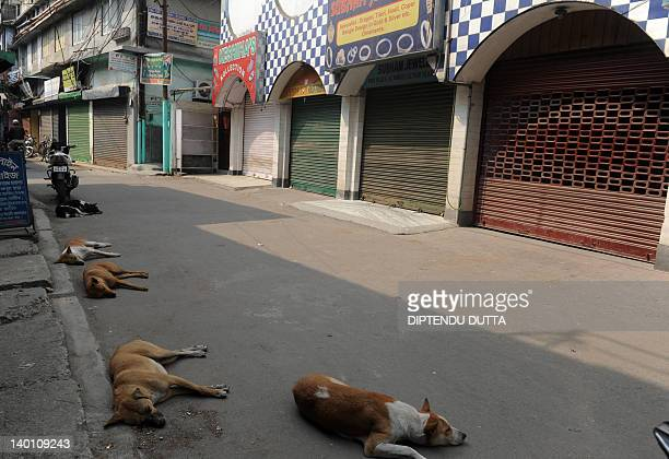 Stray dogs sleep on an empty road lined with shuttered shops during a one day general strike called by the trade unions in Siliguri on February 28...