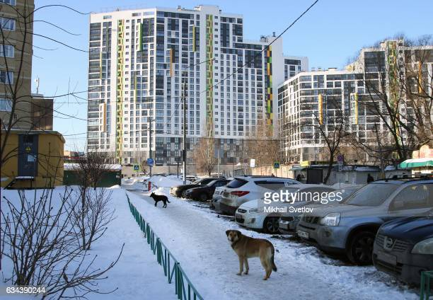 feral dogs in moscow elvira road stock photos and pictures getty images