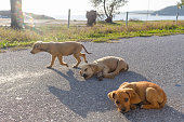 Three mixed breed puppies living on the street in Greece.